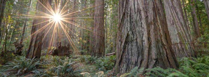 Where Is The Redwood Forest