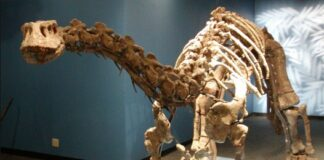 dinosaur museums near me